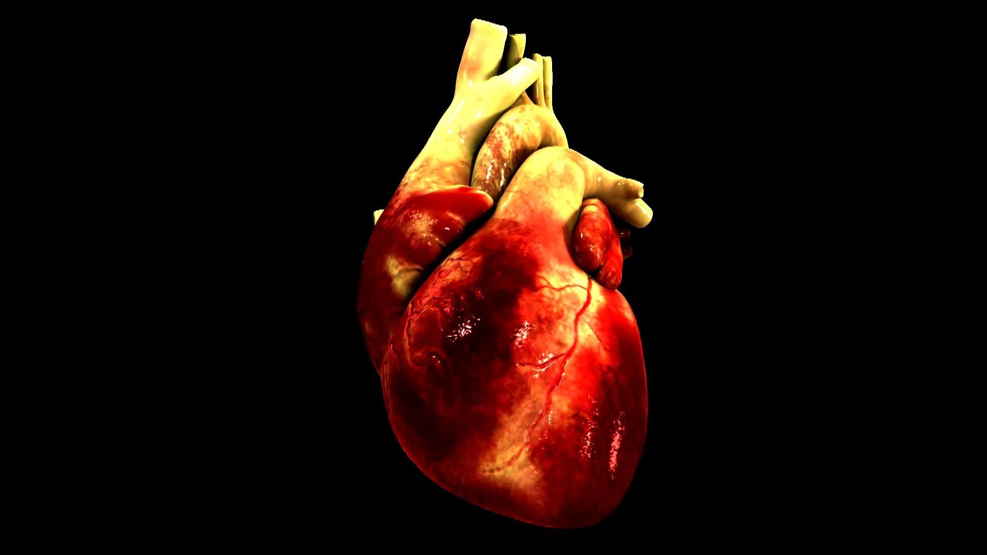 23 Human Heart Wallpaper Hd Data-src ...