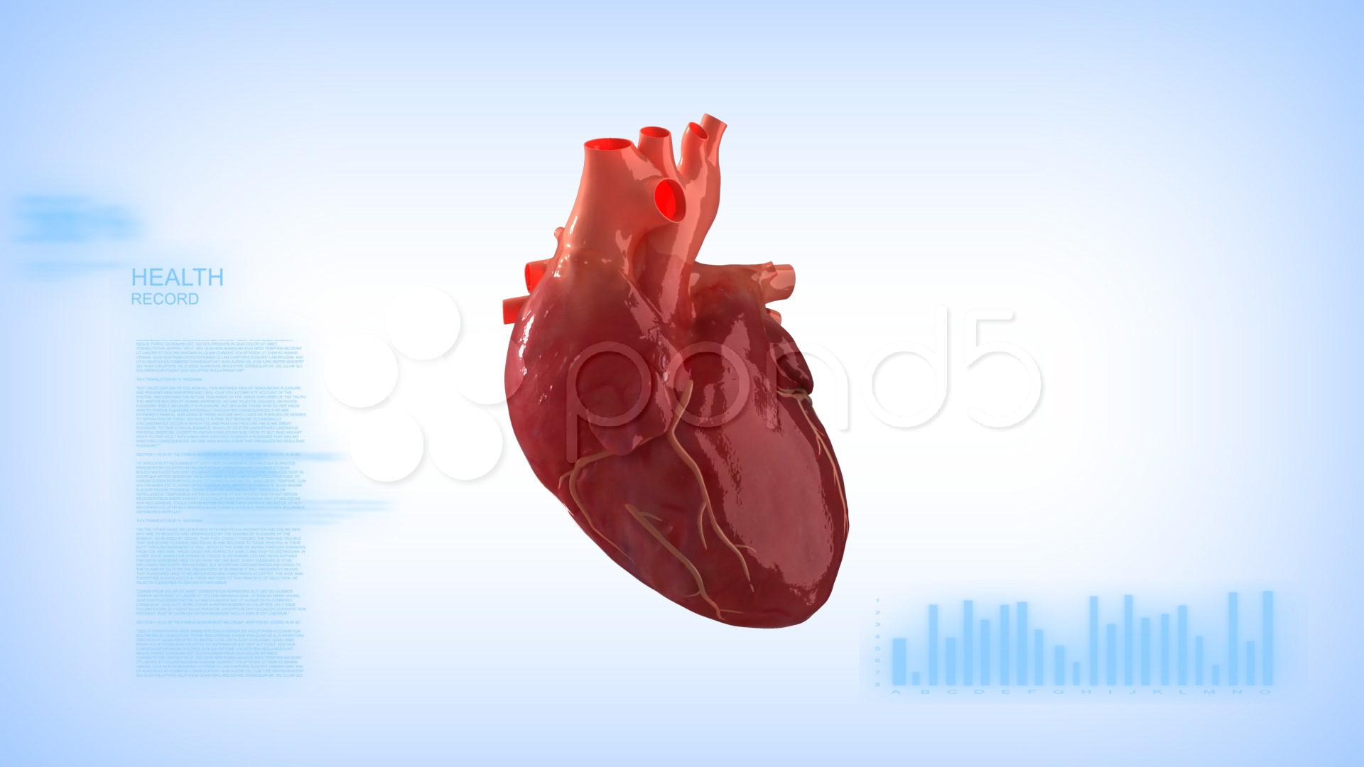 Heart Full Hd Human - 1920x1080 ...