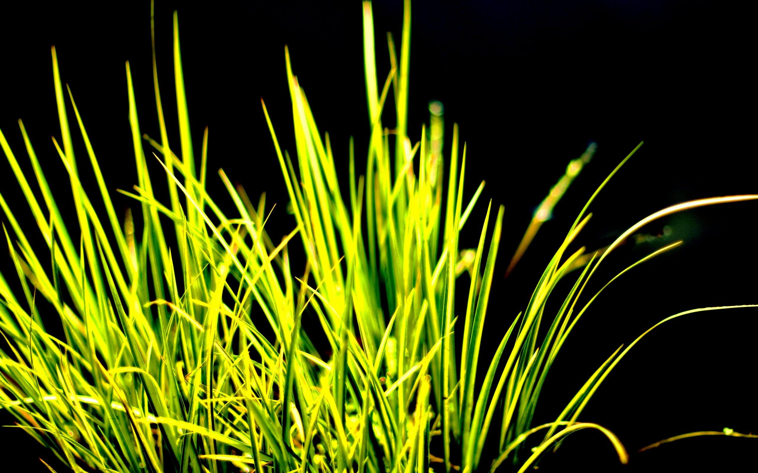 草と黒の背景 Amoled壁紙アンドロイド 2560x1600 Wallpapertip