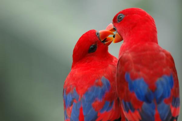 Love Birds Images Hd 600x399 Download Hd Wallpaper Wallpapertip