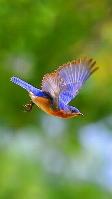 Birds Hd Wallpapers For Mobile Birds Wallpaper Hd Portrait 360x640 Download Hd Wallpaper Wallpapertip