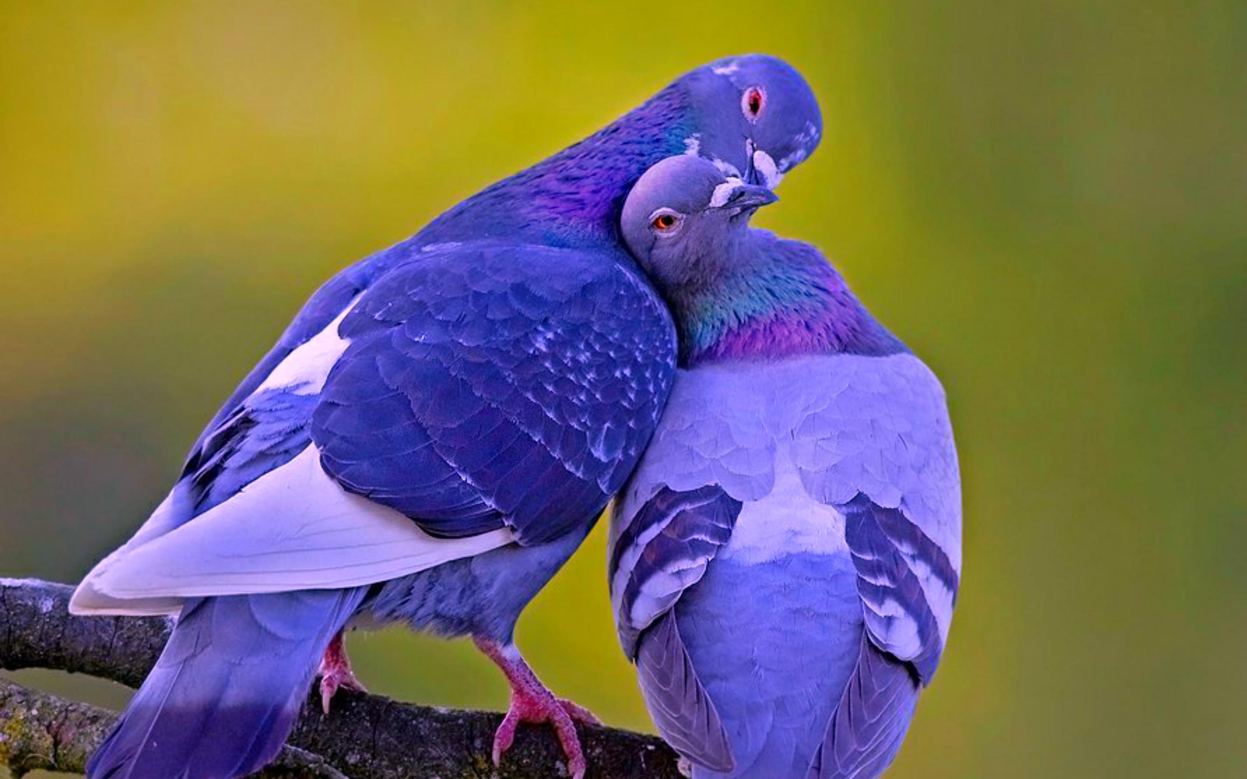Beautiful Love Birds 2560x1600 Download Hd Wallpaper Wallpapertip