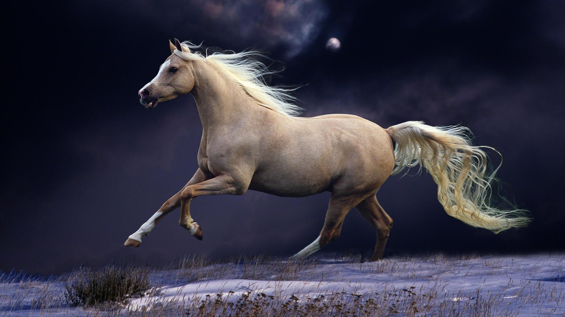 Running Horse Wallpaper Hd 1920x1080 Download Hd Wallpaper Wallpapertip