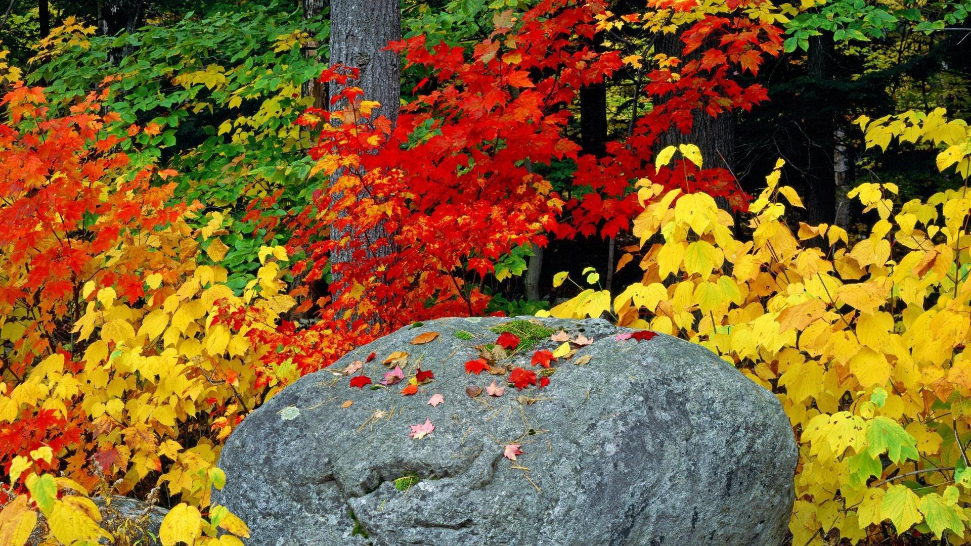 秋のアディロンダック 葉の壁紙 19x1080 Wallpapertip