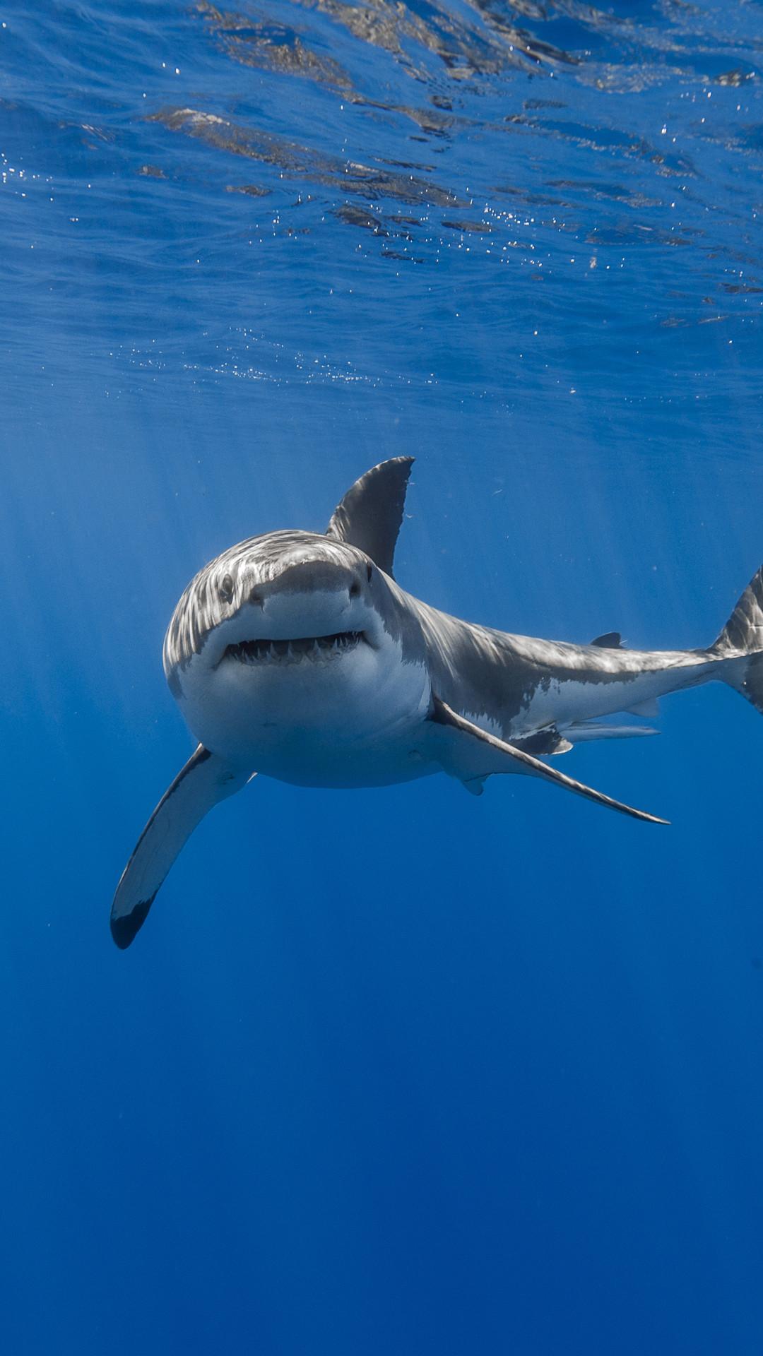 Fonds D Ecran En Direct De Requin Pour Iphone Fond D Ecran Iphone De Requin 1080x1920 Wallpapertip
