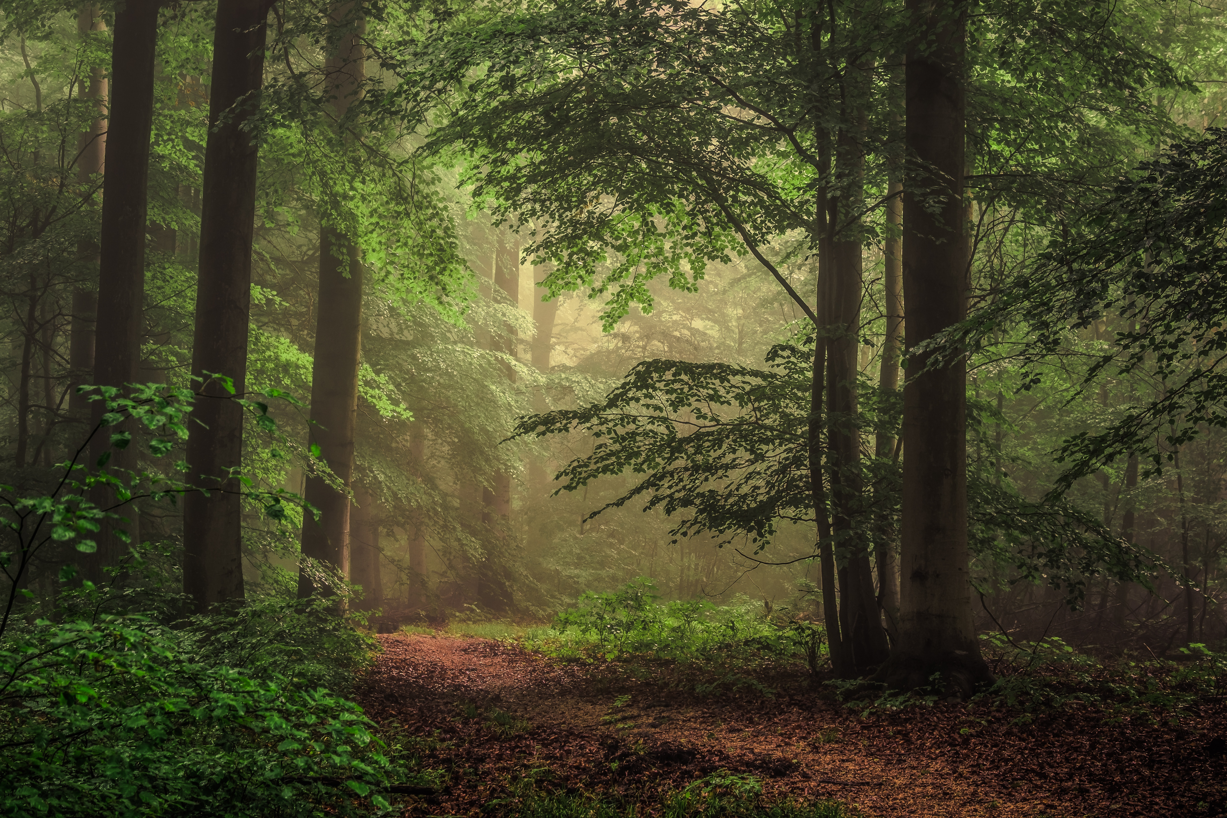 743763 Title Earth Forest Nature Tree Path Wallpaper - 4k ...