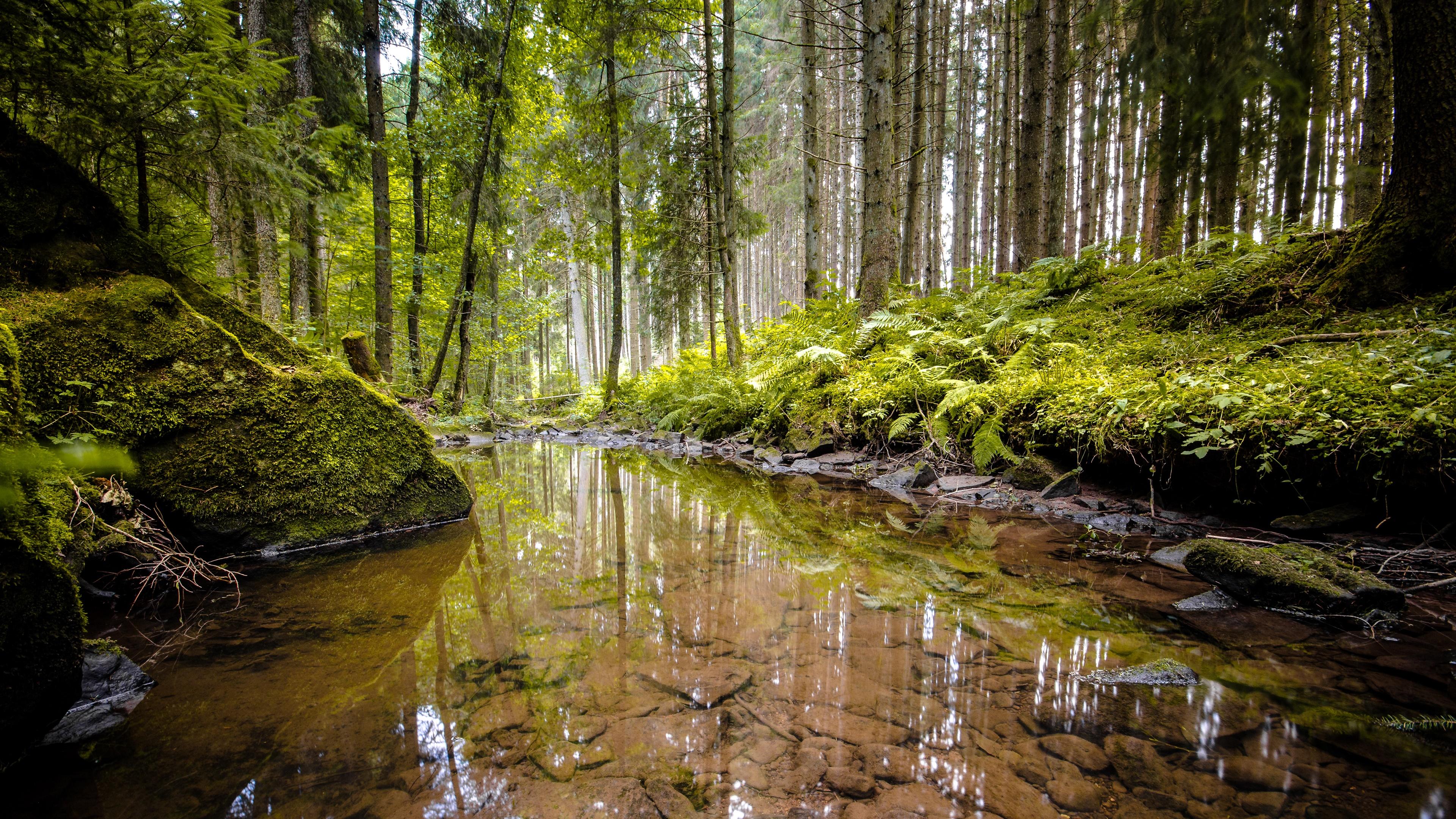 Pond In A Green Forest Wallpaper Riparian Forest 3840x2160 Download Hd Wallpaper Wallpapertip