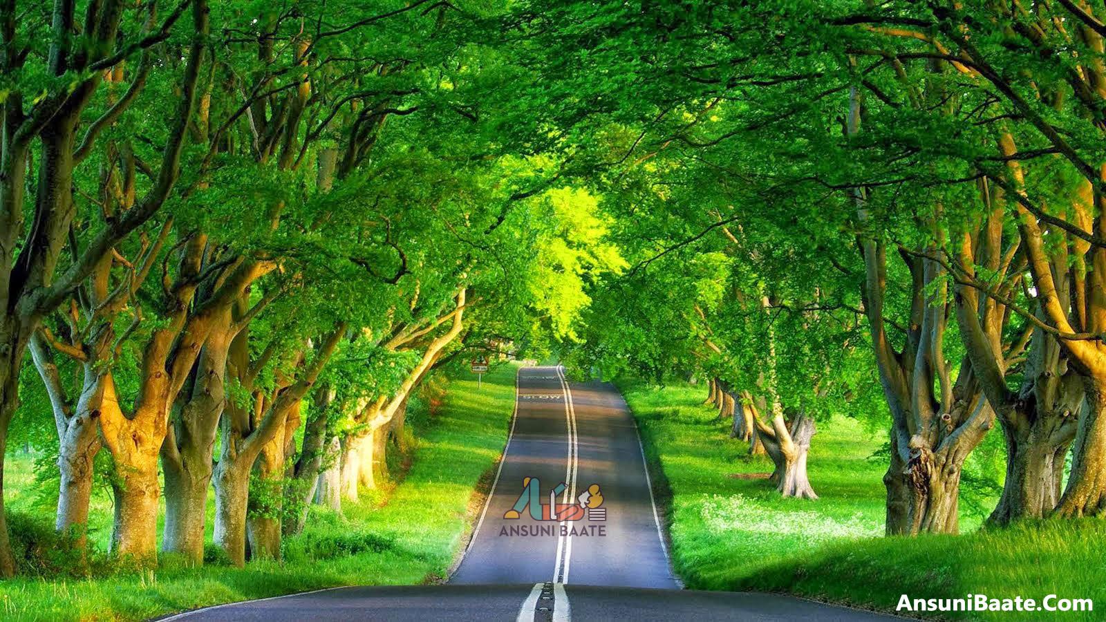 Herz berührt Bilder Natur   HD Wallpaper herunterladen für Handy ...