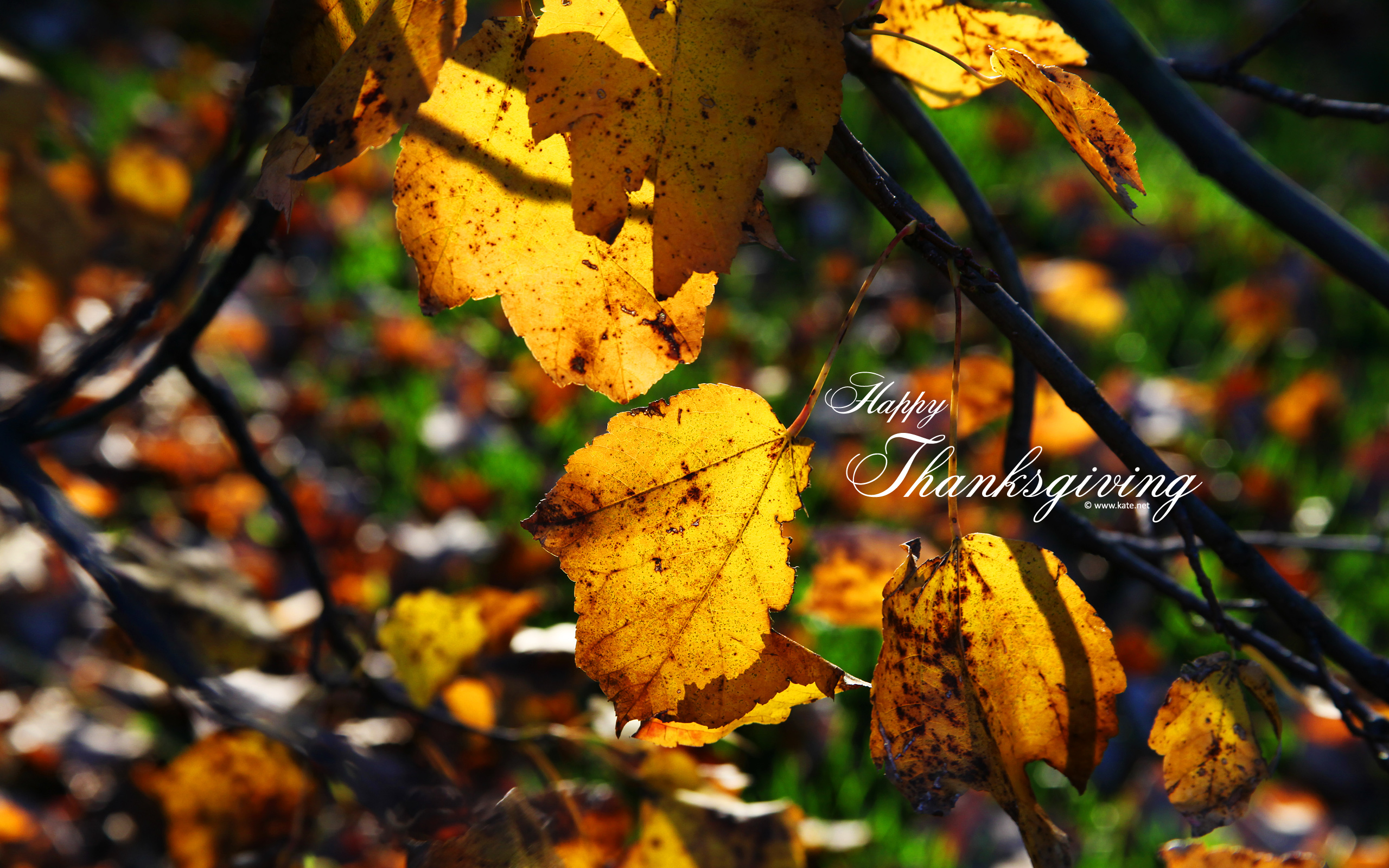 4 47972 thanksgiving desktop wallpaper widescreen