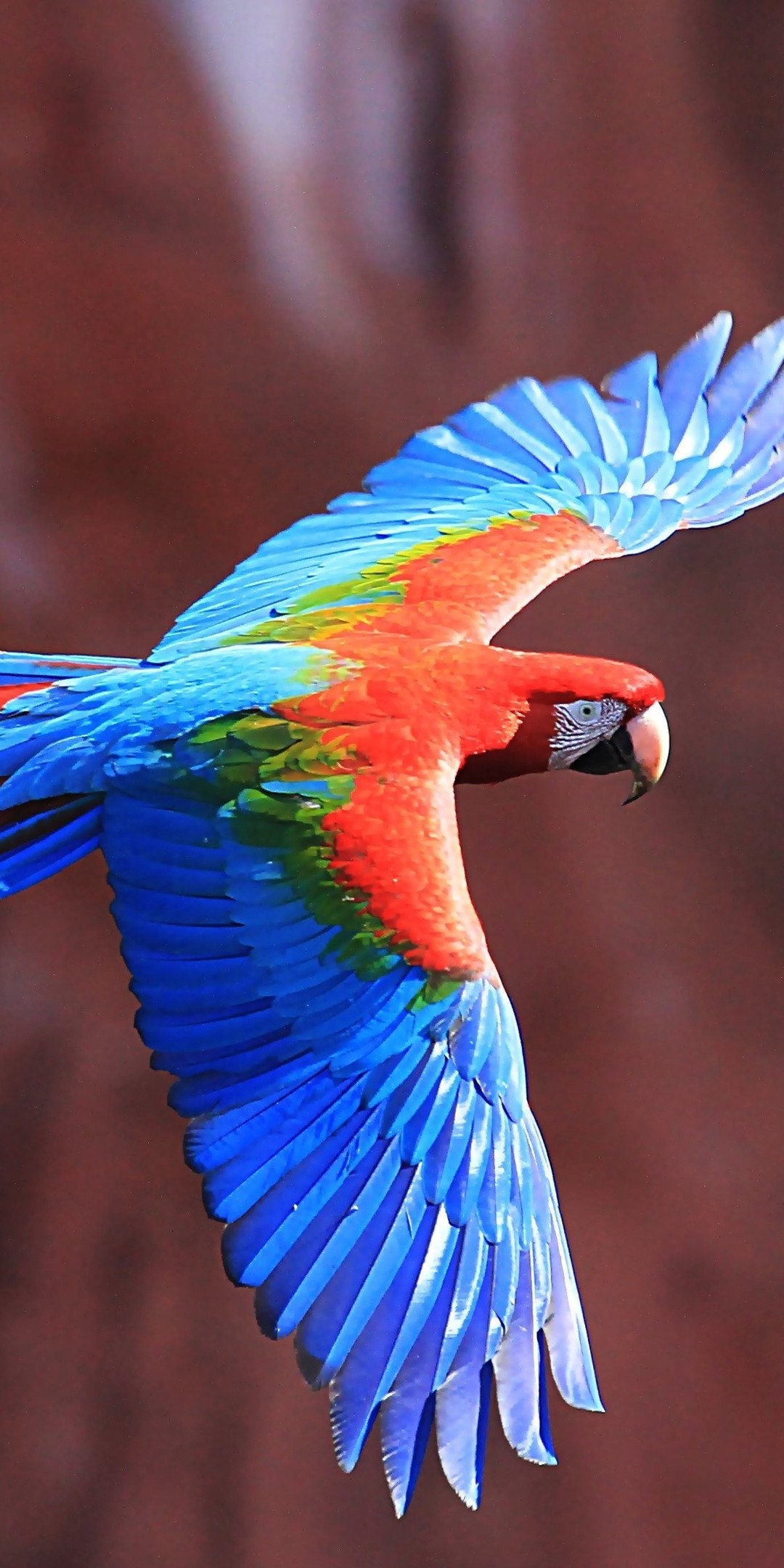 Red And Green Macaw Ultra Hd Wallpaper Download Wallpaper Samsung J6 Plus 720x1480 Download Hd Wallpaper Wallpapertip