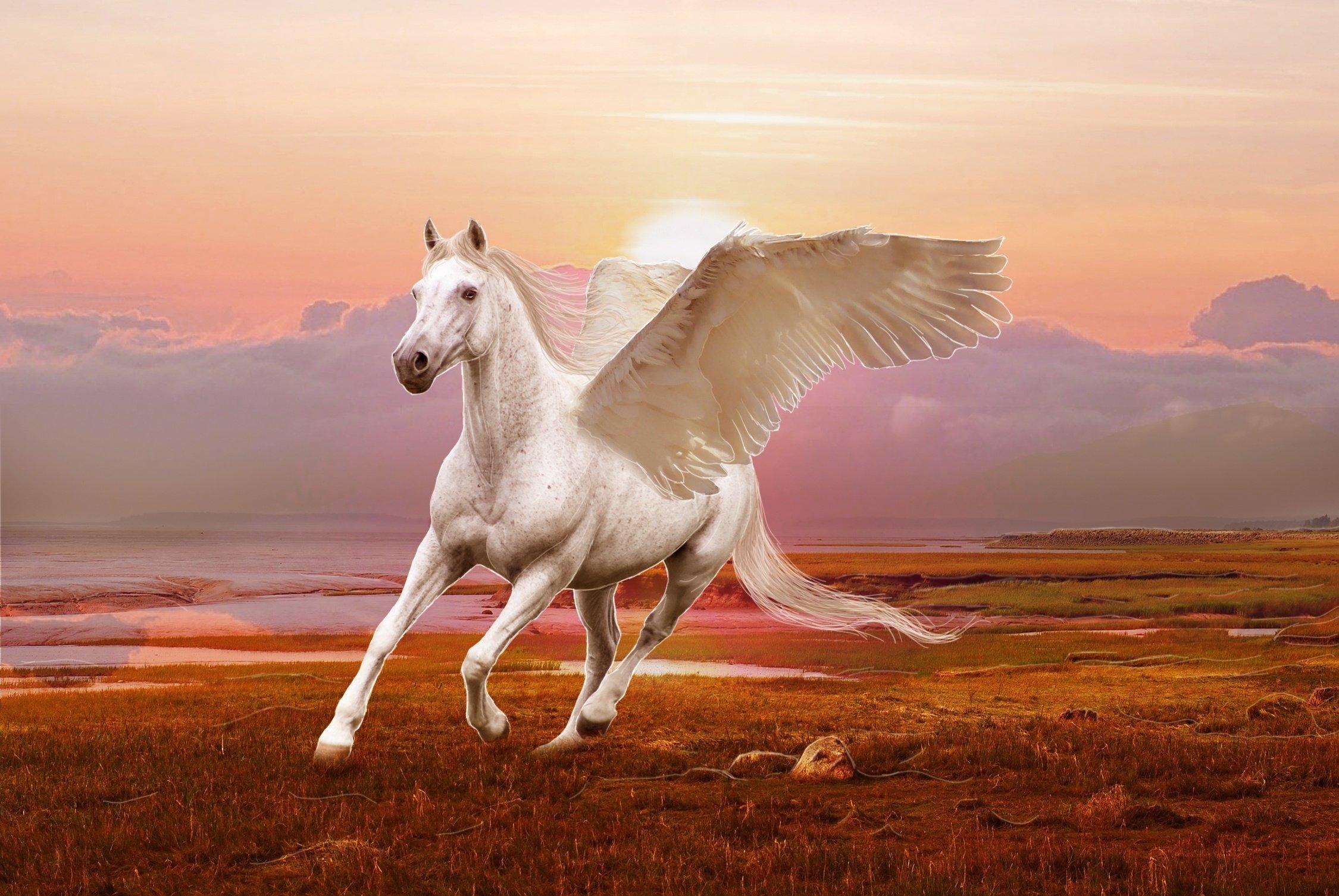 Winged Horse Pegasus 3d Art Wallpaper 3d Horse Wallpaper Hd 2250x1506 Download Hd Wallpaper Wallpapertip