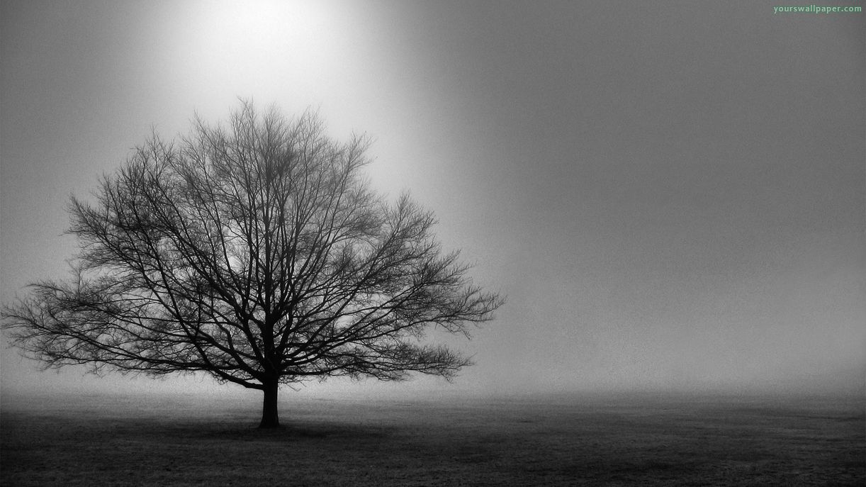 Black And White Images Of Trees 25 Desktop Wallpaper Tree Wallpaper Black And White 1222x687 Download Hd Wallpaper Wallpapertip