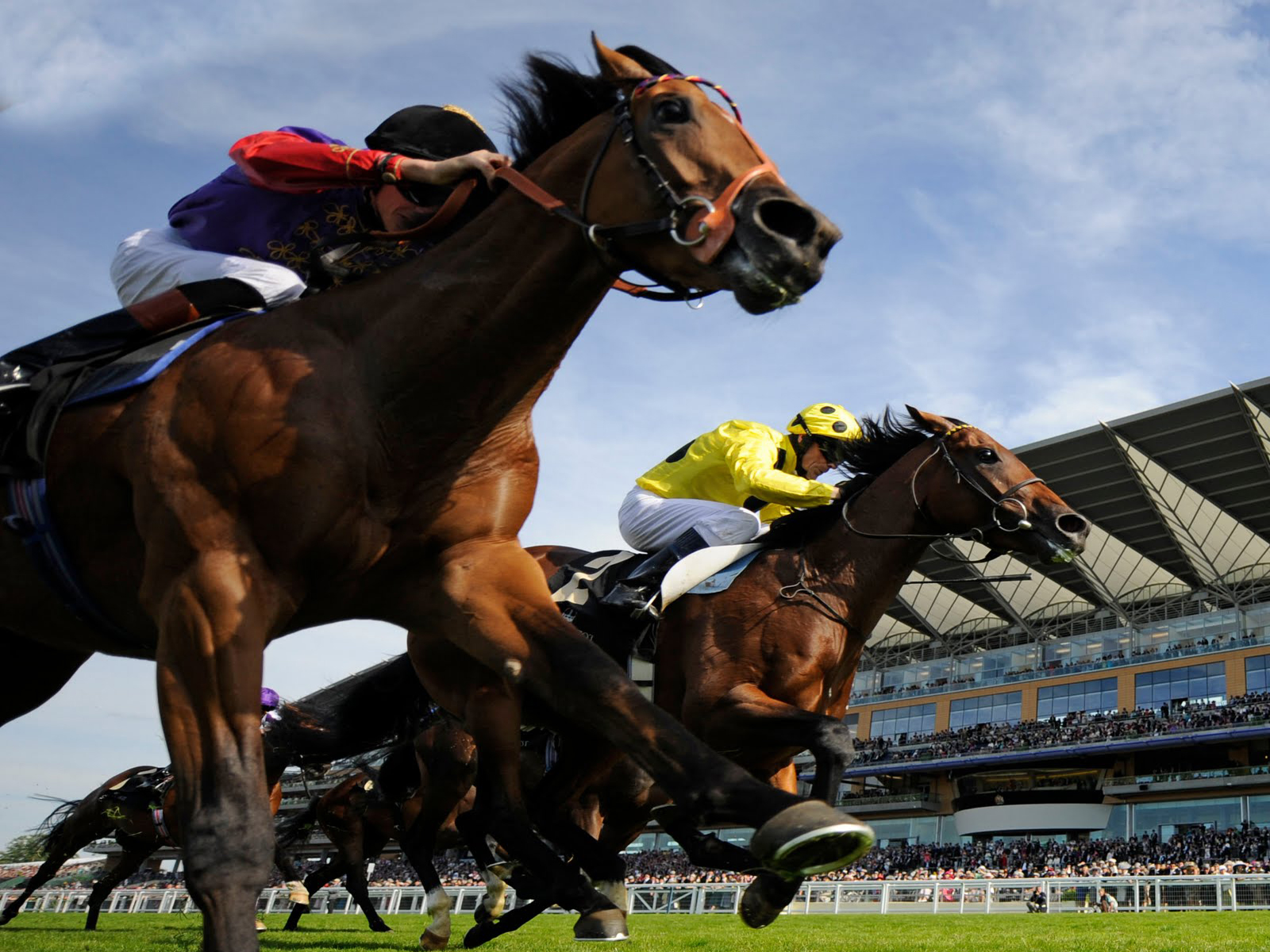 Royalty Free Horse Racing - 1600x1200 - Download HD Wallpaper - WallpaperTip