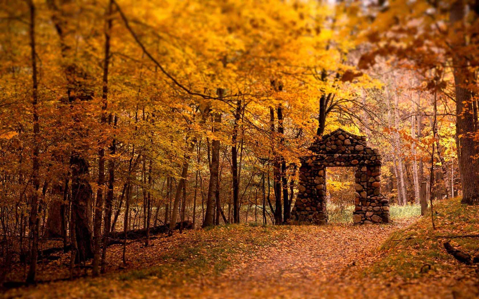 Autumn Forest Wallpaper 4k 1600x1000 Download Hd Wallpaper Wallpapertip