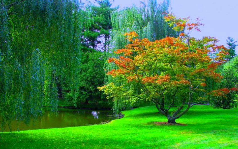 Download Beautiful Nature Wallpapers For Desktop Latest Wallpaper Hd Nature 960x600 Download Hd Wallpaper Wallpapertip