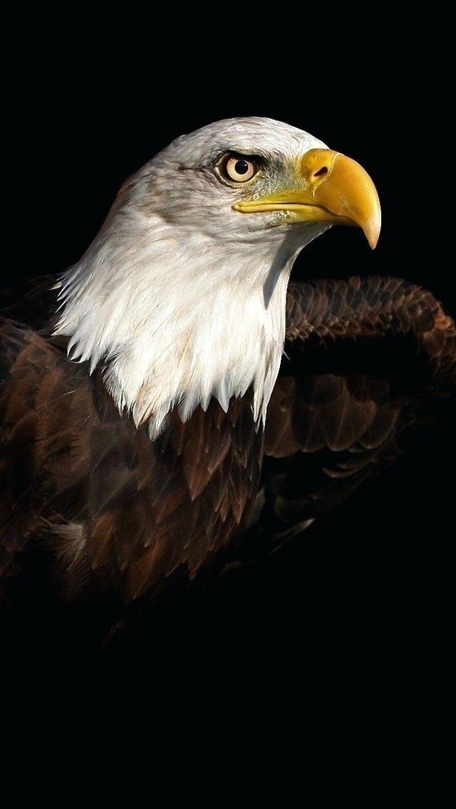 Bald Eagle Wallpaper Iphone Hd Wallpaper Download Bald Eagle Wallpaper Iphone 640x1136 Download Hd Wallpaper Wallpapertip