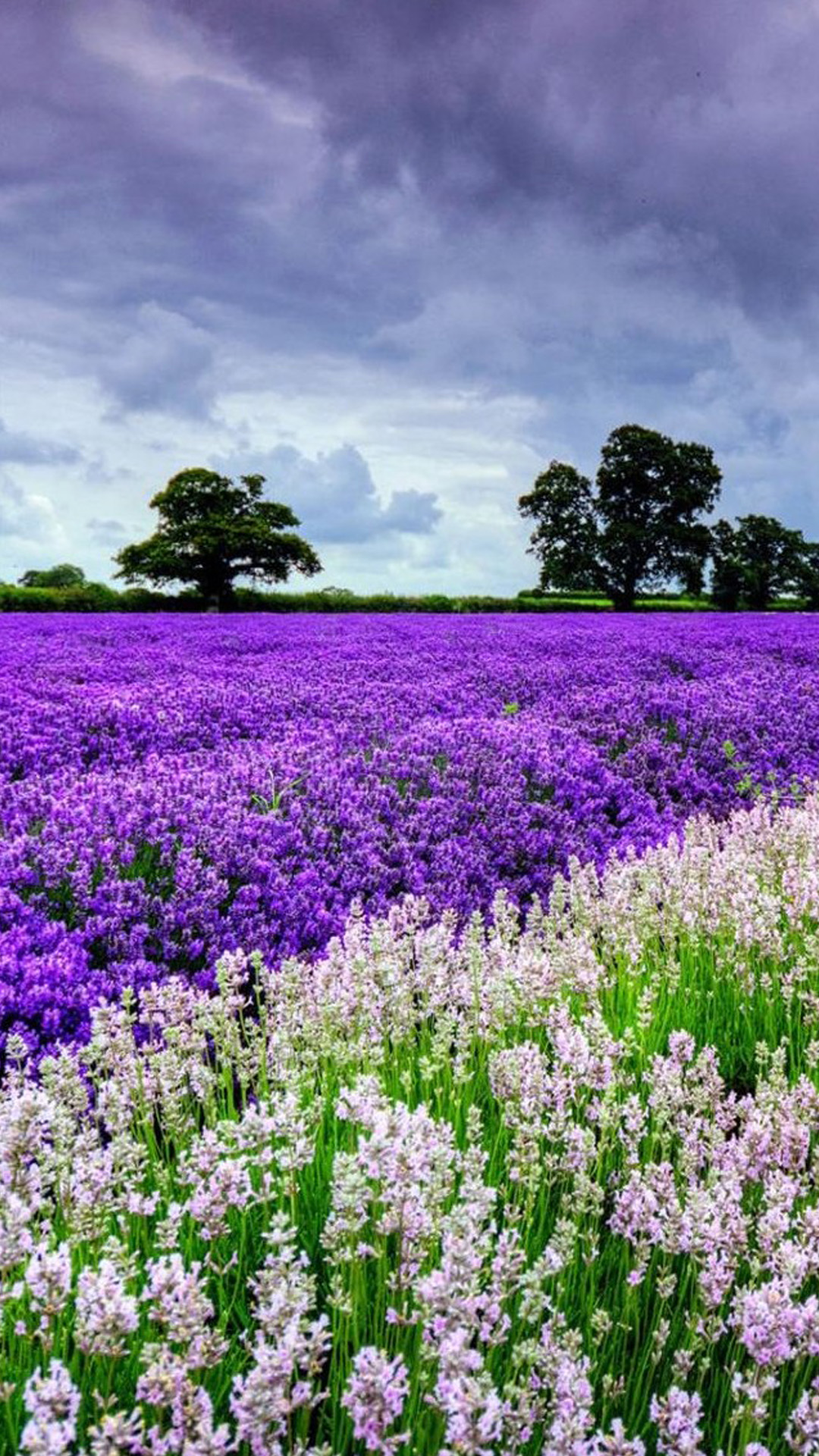 Flower Garden Wallpapers For Phone 1080x1920 Download Hd Wallpaper Wallpapertip