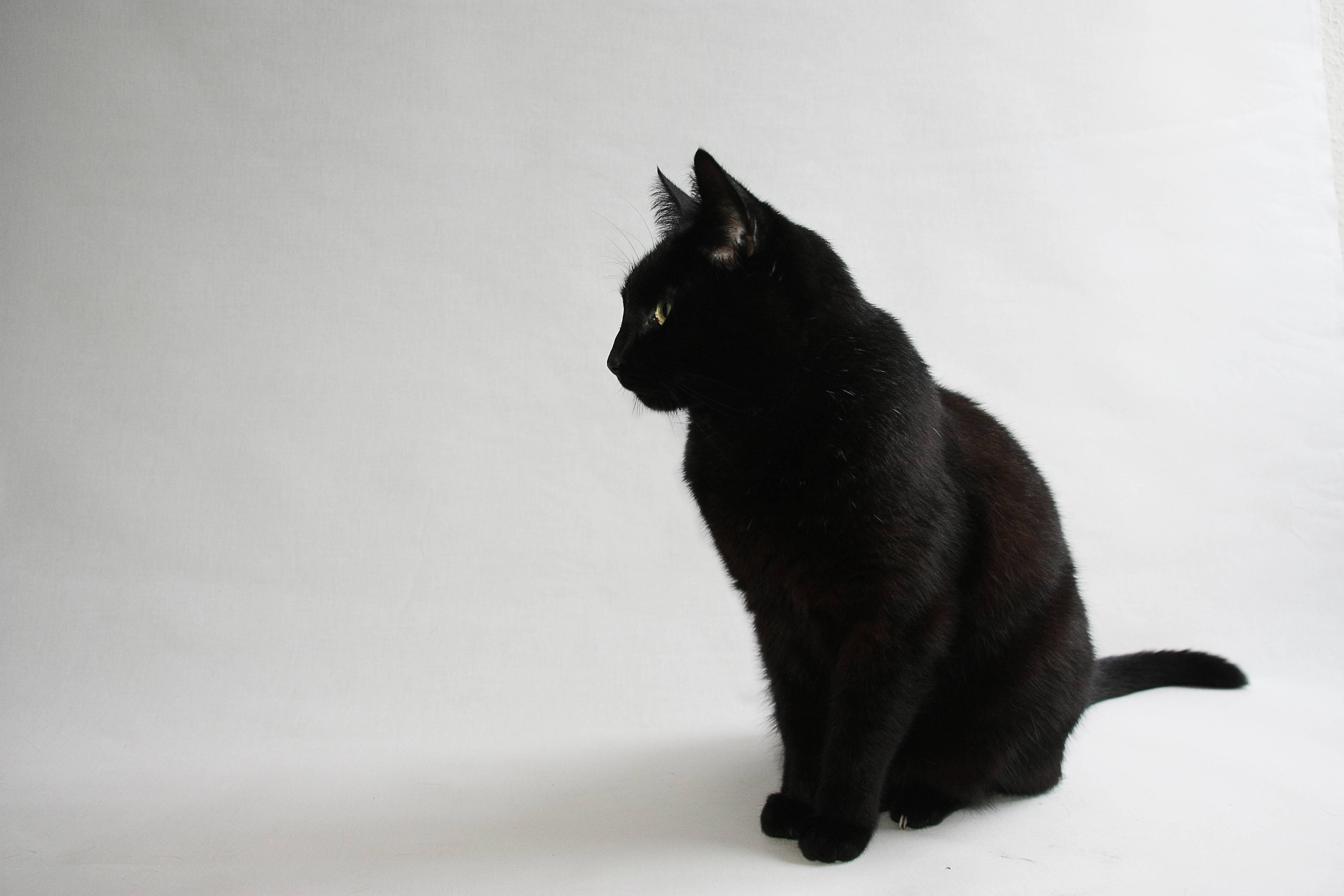 5 54399 black cat wallpaper keep black cats safe on