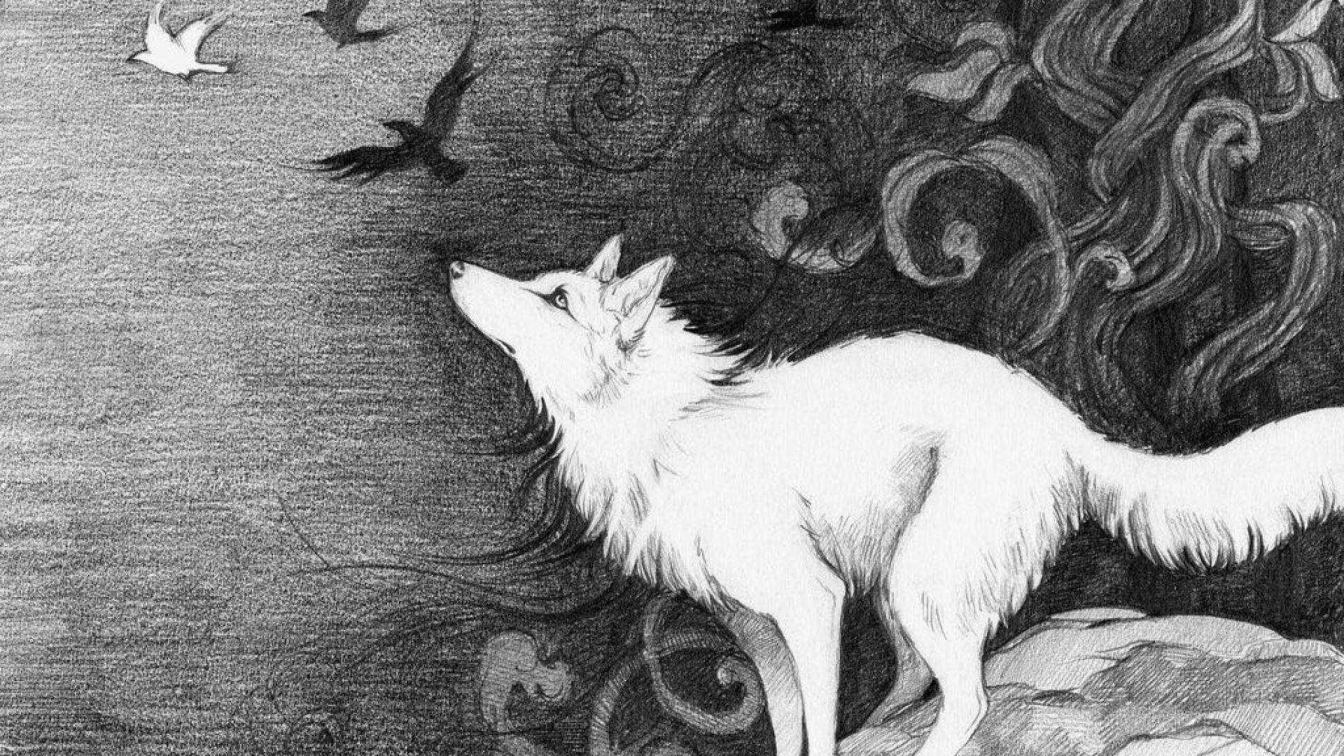 Black And White Wolf Wallpaper Hd 1920x1080 Download Hd Wallpaper Wallpapertip