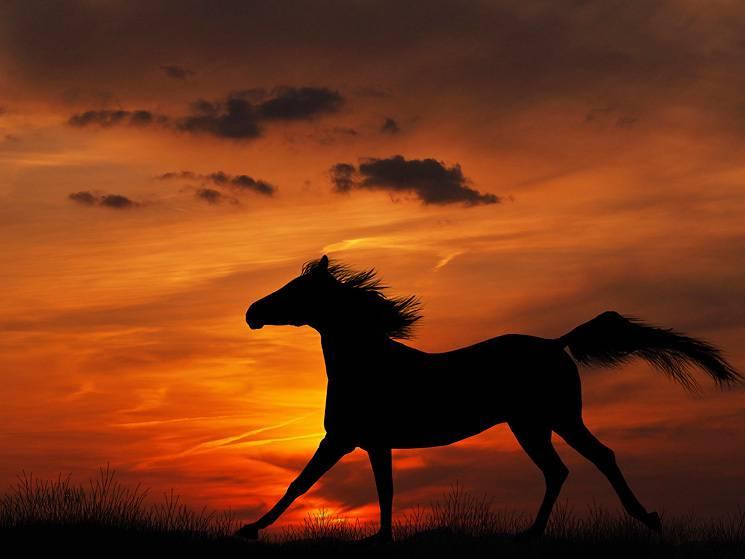 Eloge de mon cheval - Lucie Delarue-Mardrus 51-515724_was-wrdest-du-deinem-pferd-alles-kaufen-horse