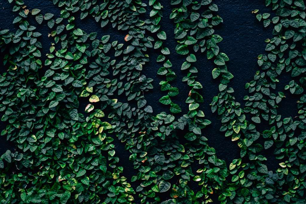 Leaves Wall Green Wallpaper Iphone Wallpaper Leafs Hd 1024x683 Download Hd Wallpaper Wallpapertip