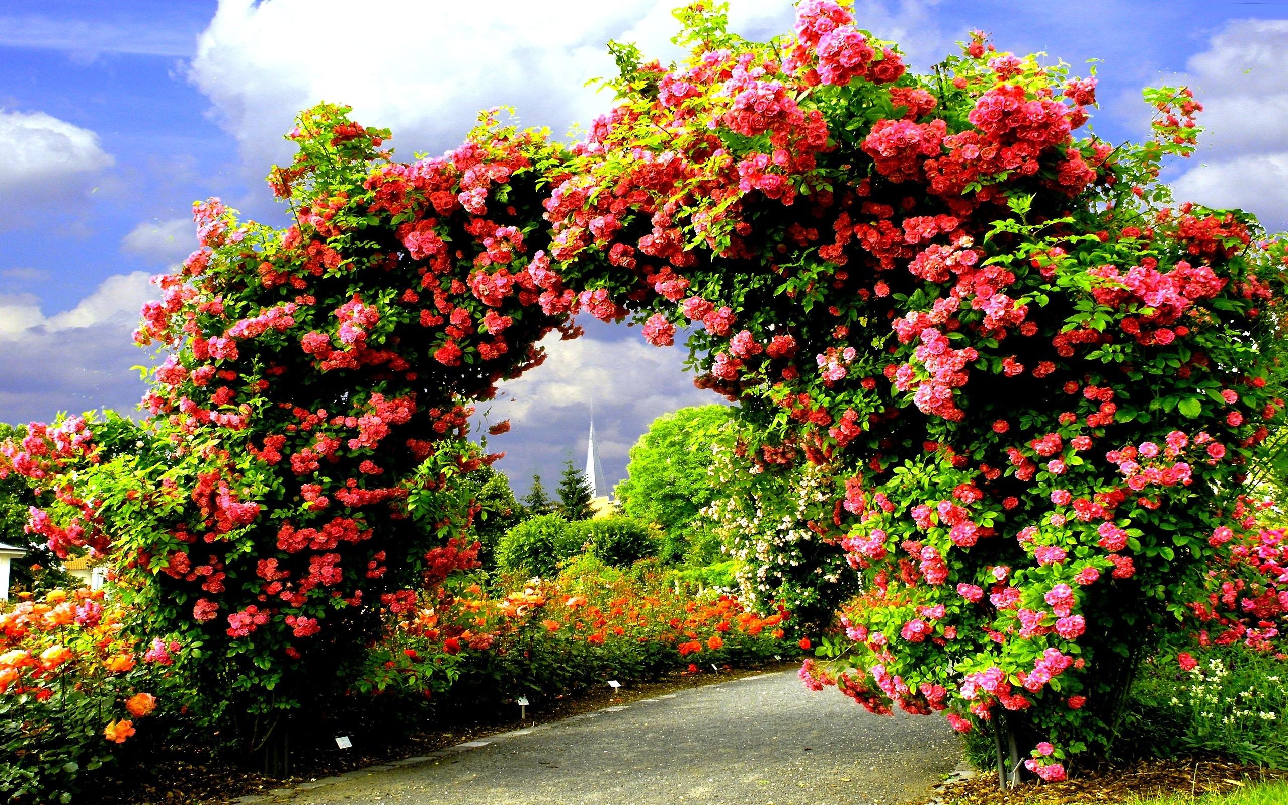 Secret Garden Flowers Rose Arch Bench Nature Desktop Flower Garden Wallpaper Hd 2560x1600 Download Hd Wallpaper Wallpapertip