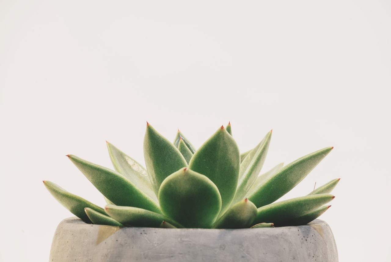 Rubber Plant Aesthetic Wallpaper Landscape Minimalist 1280x858 Download Hd Wallpaper Wallpapertip