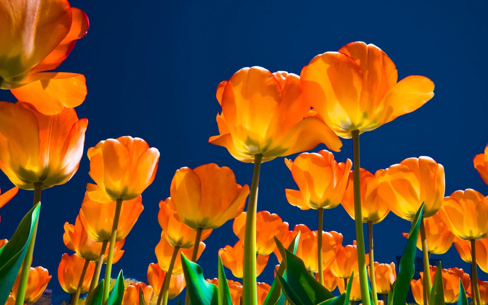 Spring Desktop Backgrounds Nature 1600x1000 Download Hd Wallpaper Wallpapertip