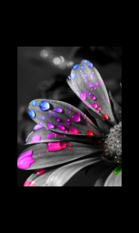 Schwarze Und Weiße Blüten Mit Farbe Hintergrundbilder Für Mobile Bildschirmberührung 480x800 Wallpapertip
