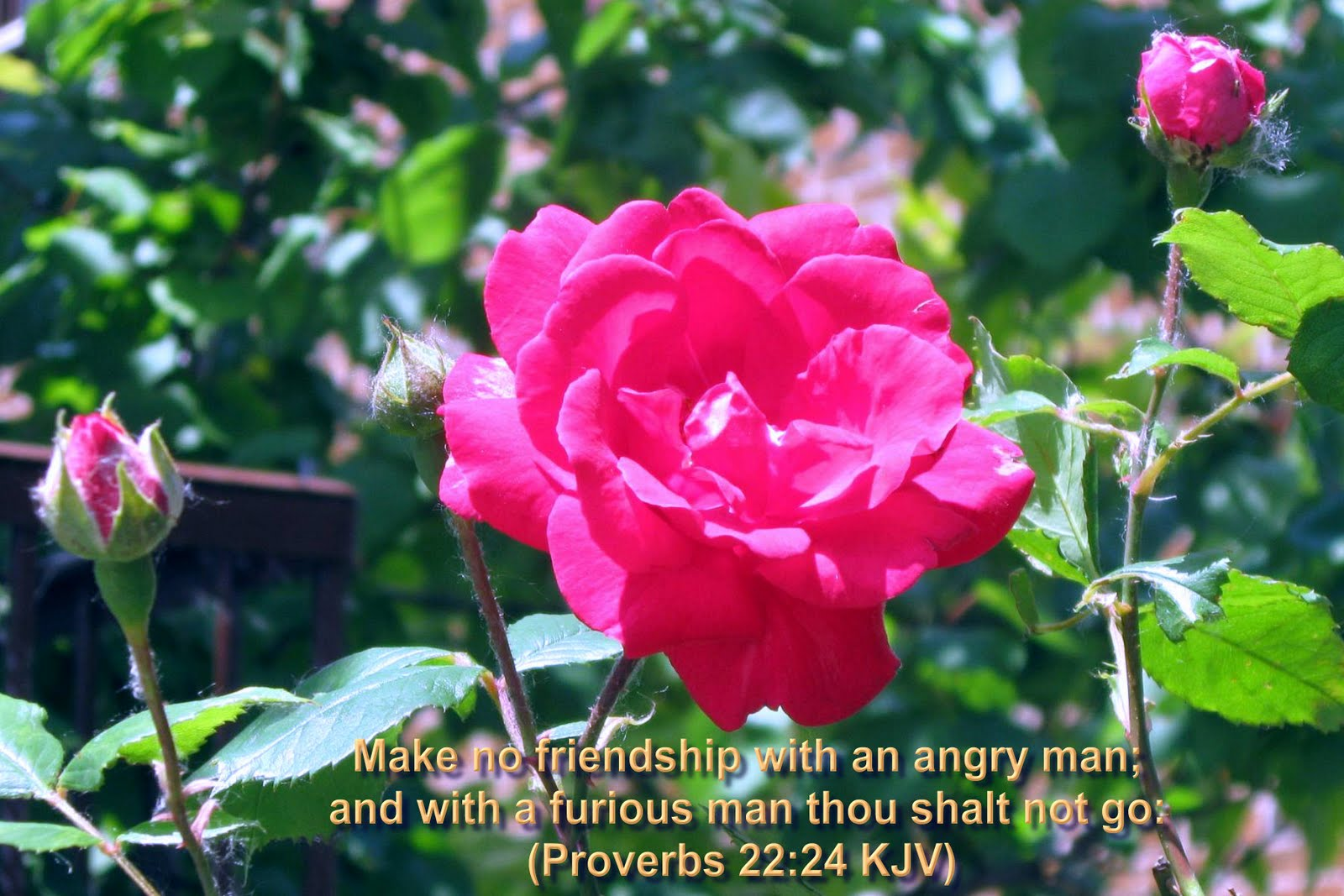 Bible Versed In Scenic Natural Flowers Wallpaper Christian Wallpapers With Bible Verses 1600x1067 Download Hd Wallpaper Wallpapertip