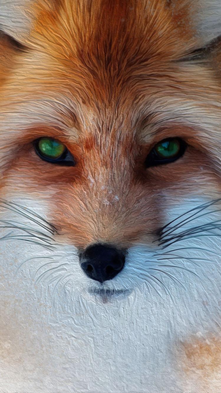 Fox Iphone 7 Wallpaper Iphone Fox Wallpaper Hd 750x1334 Download Hd Wallpaper Wallpapertip
