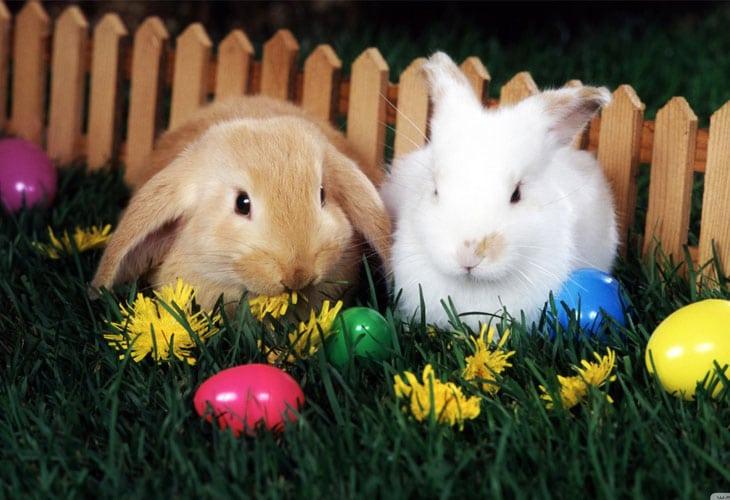 Easter Egg Hunt Wallpaper Bunny With Easter Eggs 730x500 Download Hd Wallpaper Wallpapertip