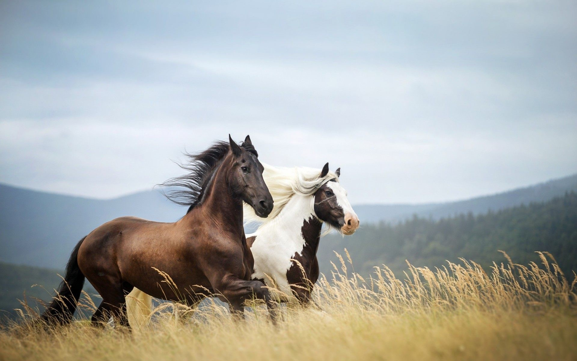 Wild Horses Wallpaper Horses In The Mountains 1920x1200 Download Hd Wallpaper Wallpapertip