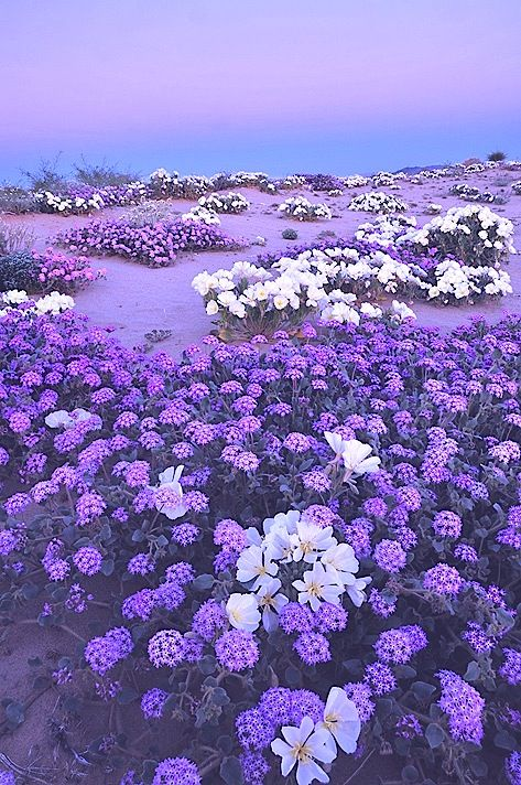 Lavender Purple Flowers Aesthetic 473x712 Download Hd Wallpaper Wallpapertip