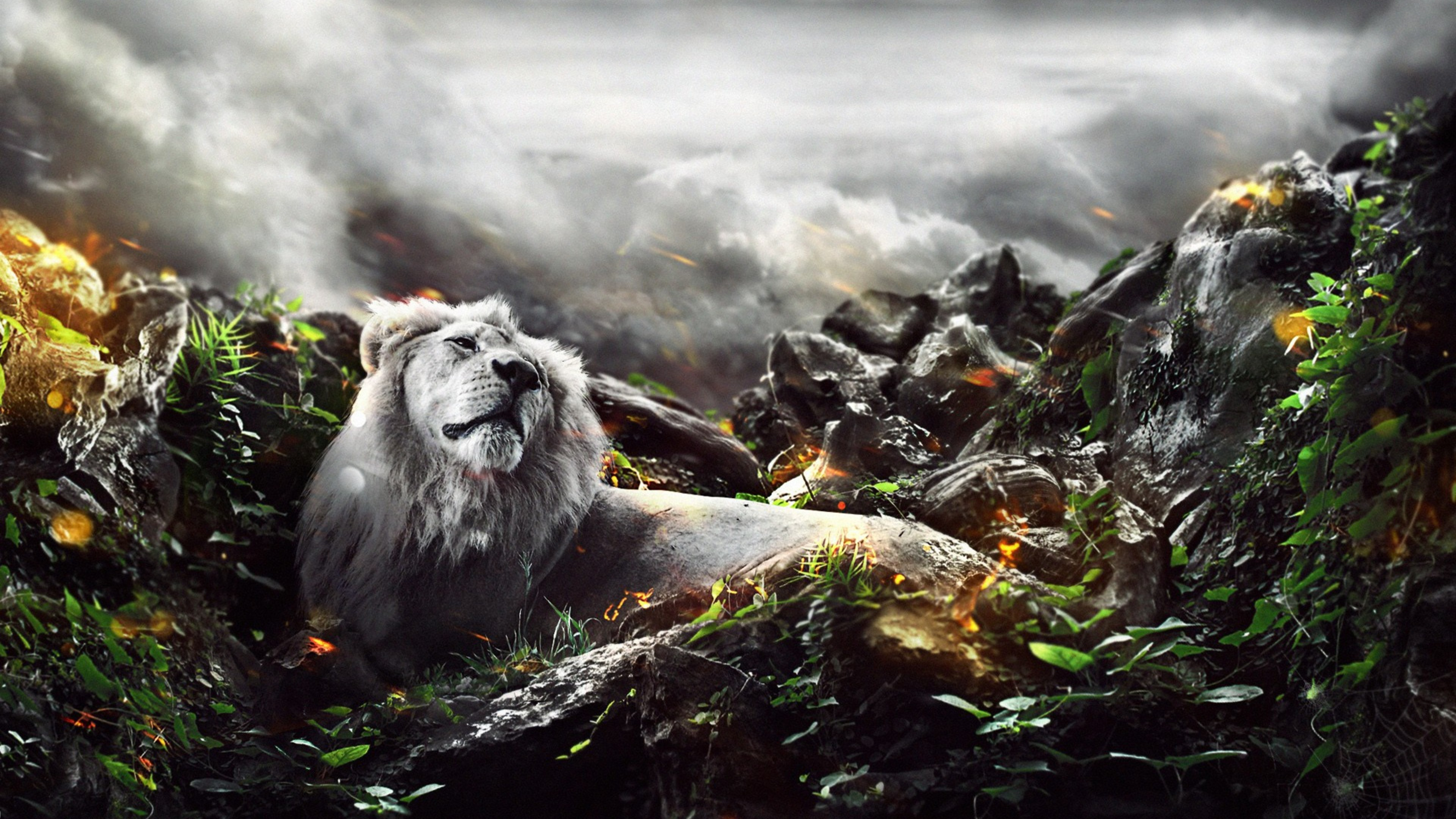 Jungle Wallpaper 4k 3840x2160 Download Hd Wallpaper Wallpapertip