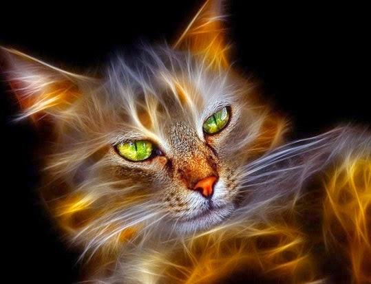 Gambar Wallpaper Binatang Lucu Keren - Digital Cat Art ...