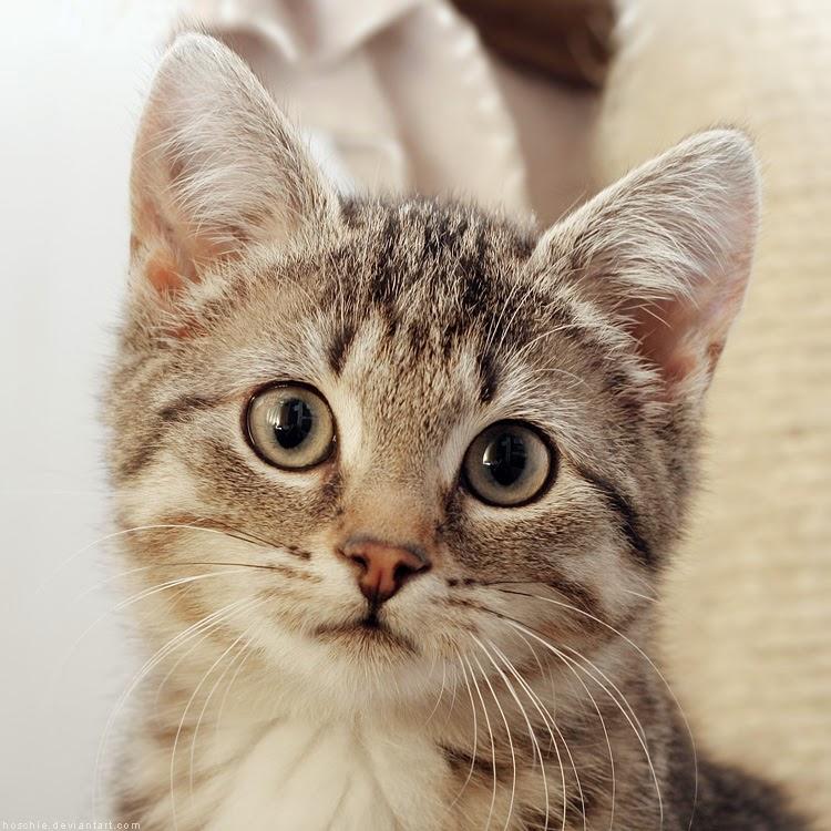 150 Gambar Kucing Lucu Dan Imut Termasuk Anggora Persia Mama Meong 750x750 Download Hd Wallpaper Wallpapertip