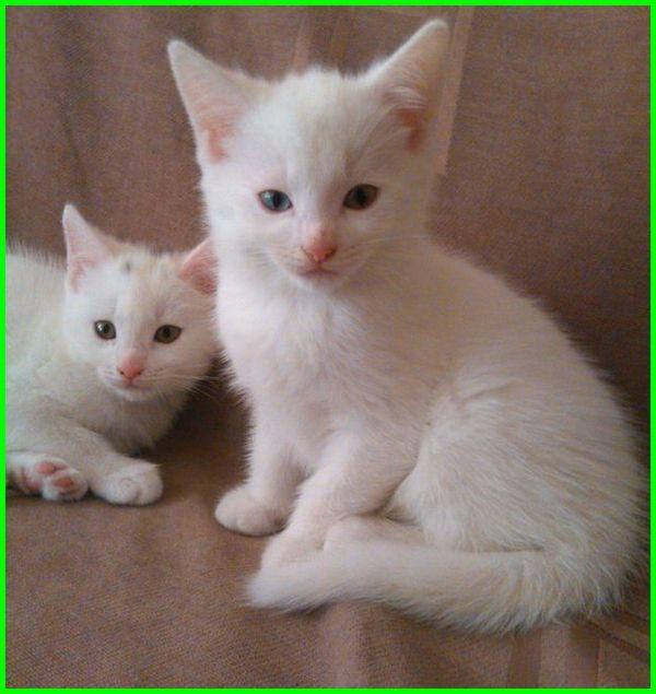 Gambar Kucing Wallpaper godean.web.id