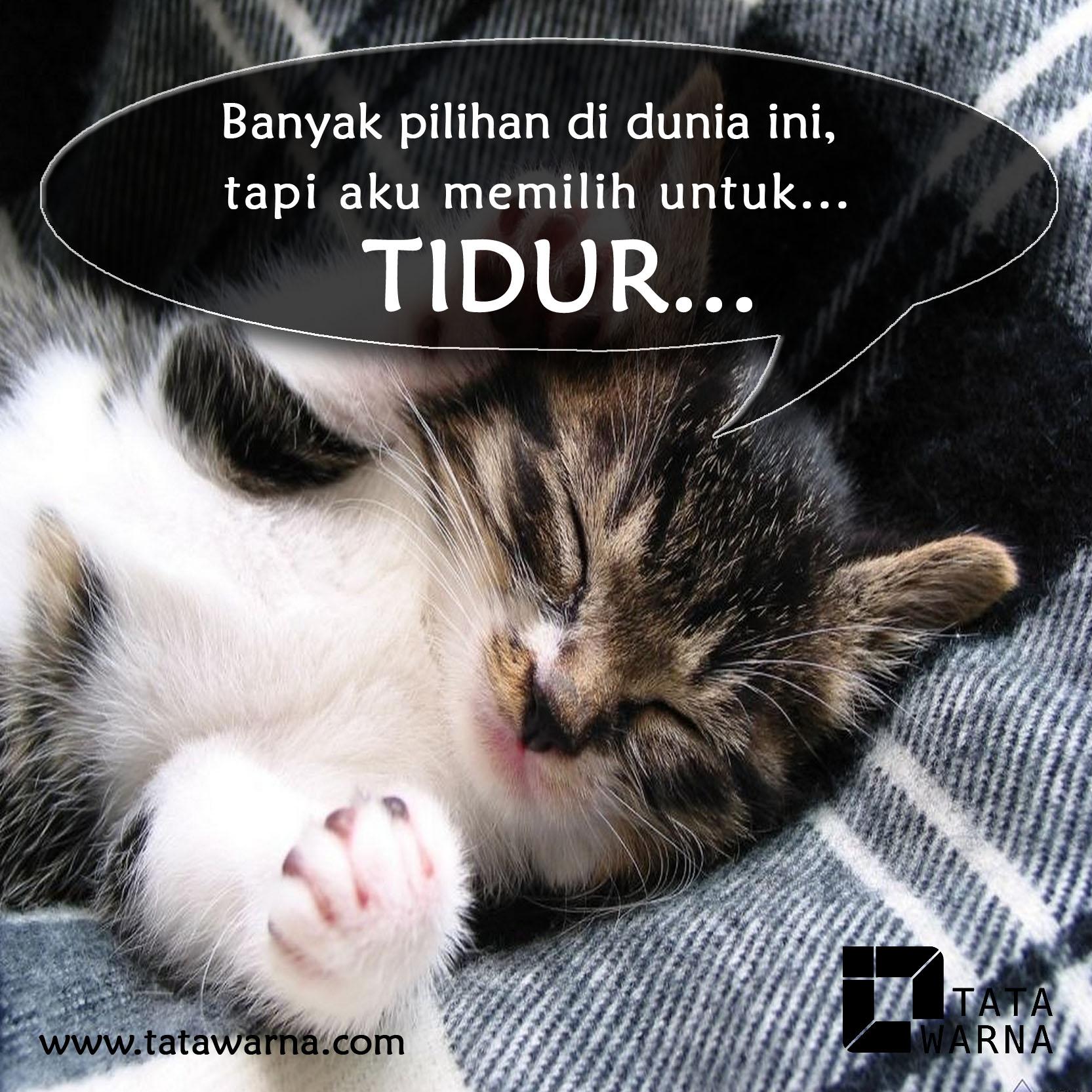 Animasi Kucing Lucu Meme Lucu Kucing Tidur 1665x1665 Download Hd Wallpaper Wallpapertip