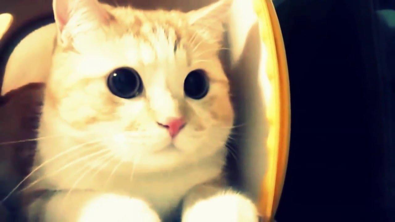 Kartun Lucu Hewan Kucing Kartun Lucu Animasi Anak Kartun Kucing Yang Lucu Sekali 1280x720 Download Hd Wallpaper Wallpapertip