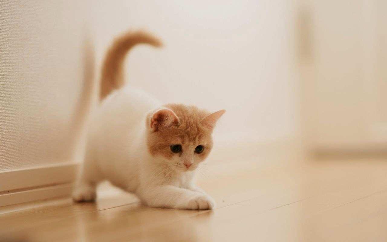 63 637059 50 gambar dp bbm kucing lucu imut gemesin