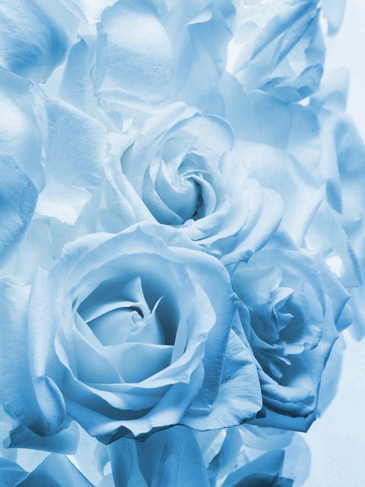 light blue roses aesthetic