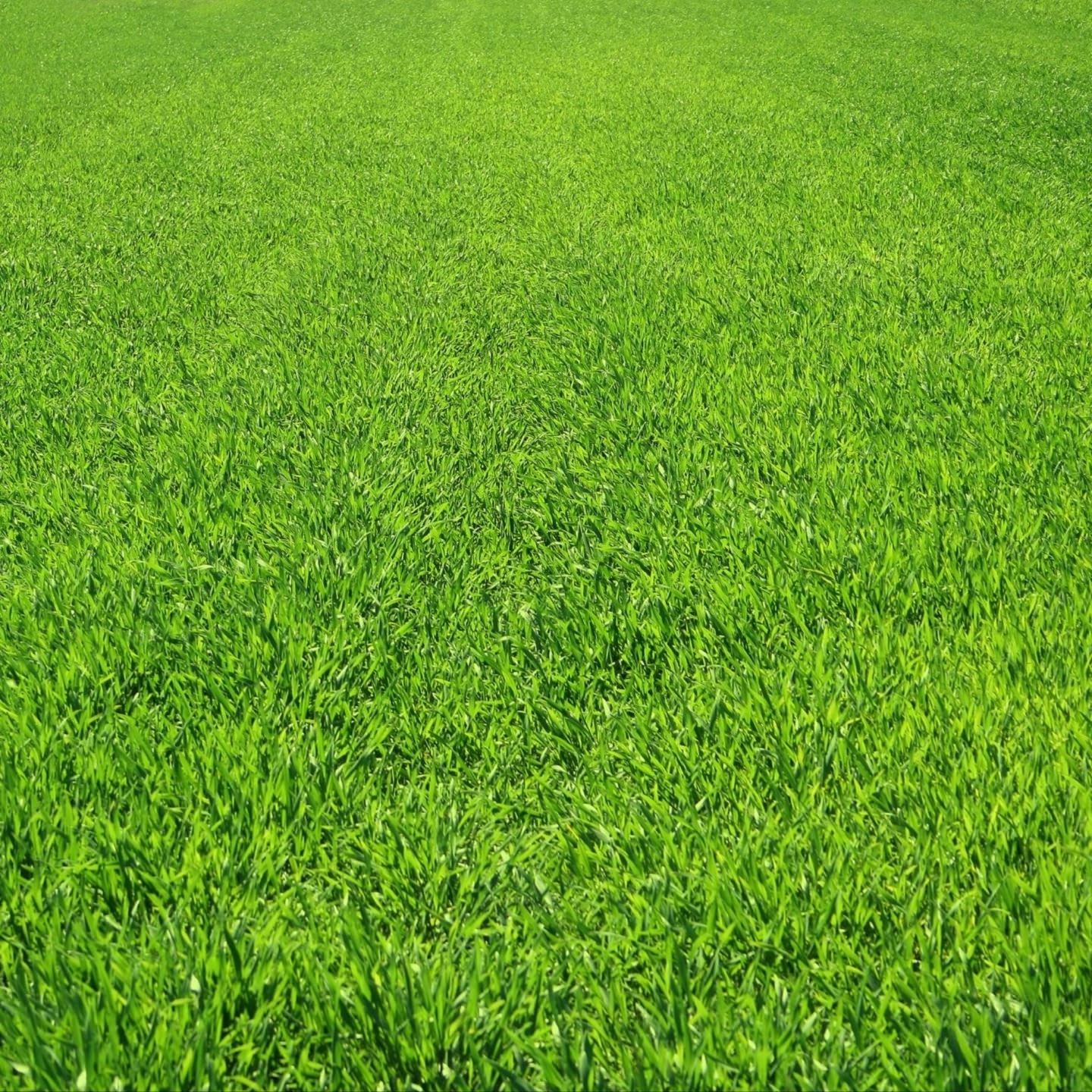 android smart phone wallpaper green grass 1440x1440 download hd wallpaper wallpapertip android smart phone wallpaper green