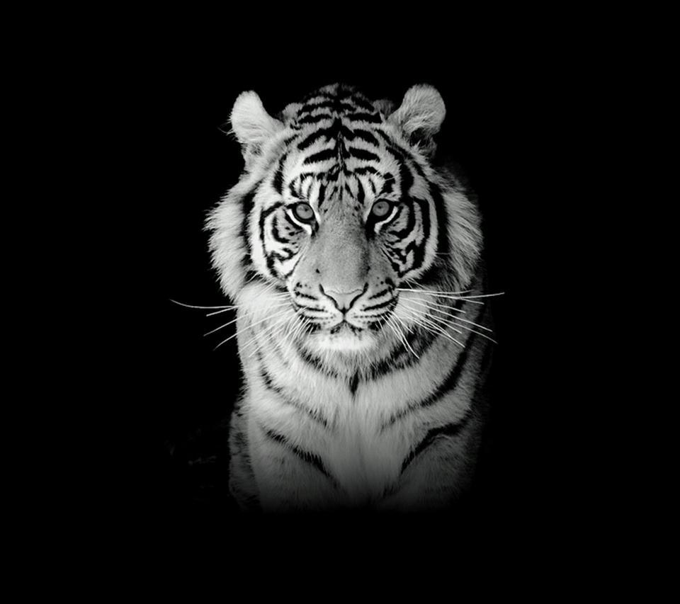 Black Tiger Wallpaper Iphone 960x853 Download Hd Wallpaper Wallpapertip