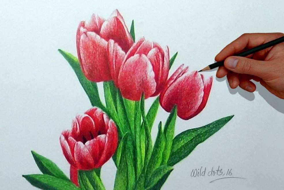 Sketsa Bunga Tulip Berwarna Wallpaper Keren 984x657 Download Hd Wallpaper Wallpapertip