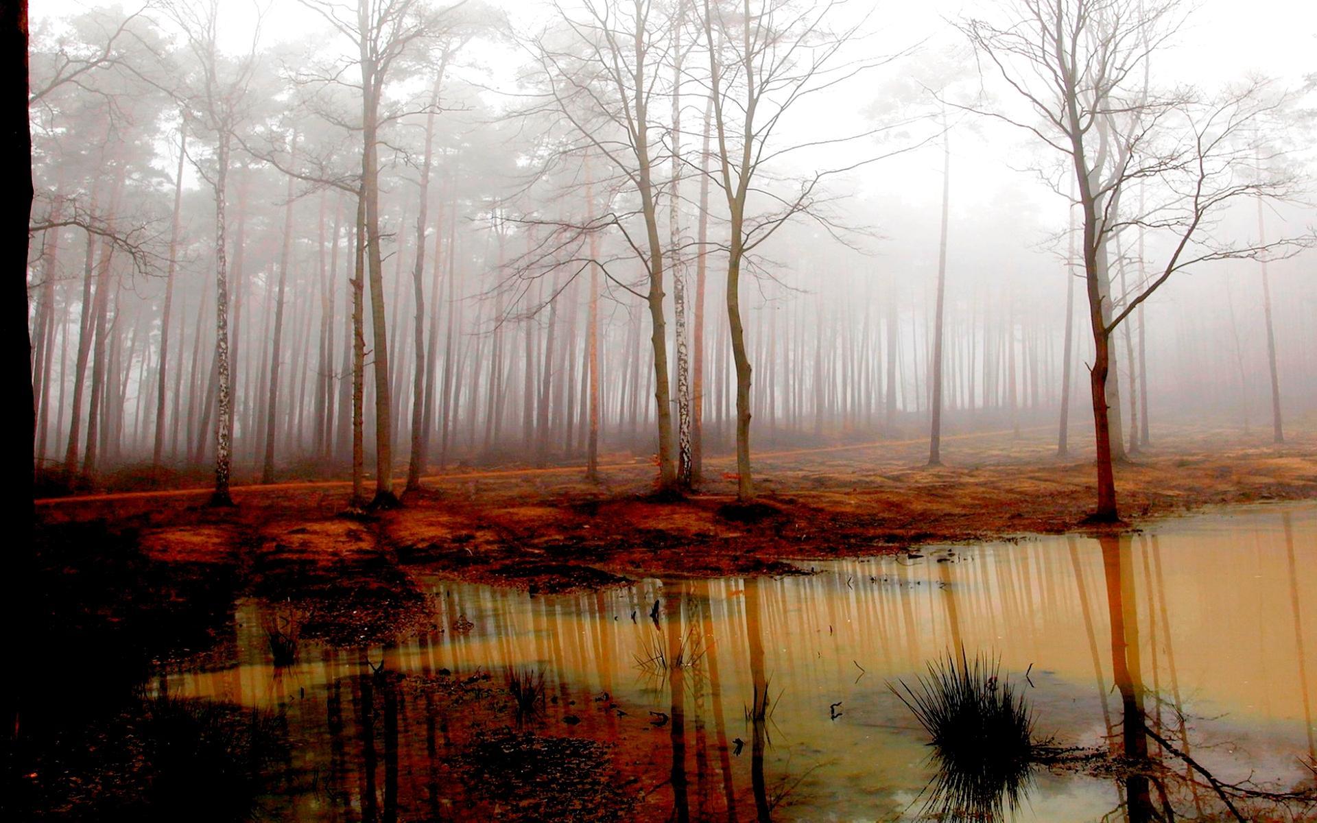 Forest Swamp 1920x1200 Download Hd Wallpaper Wallpapertip