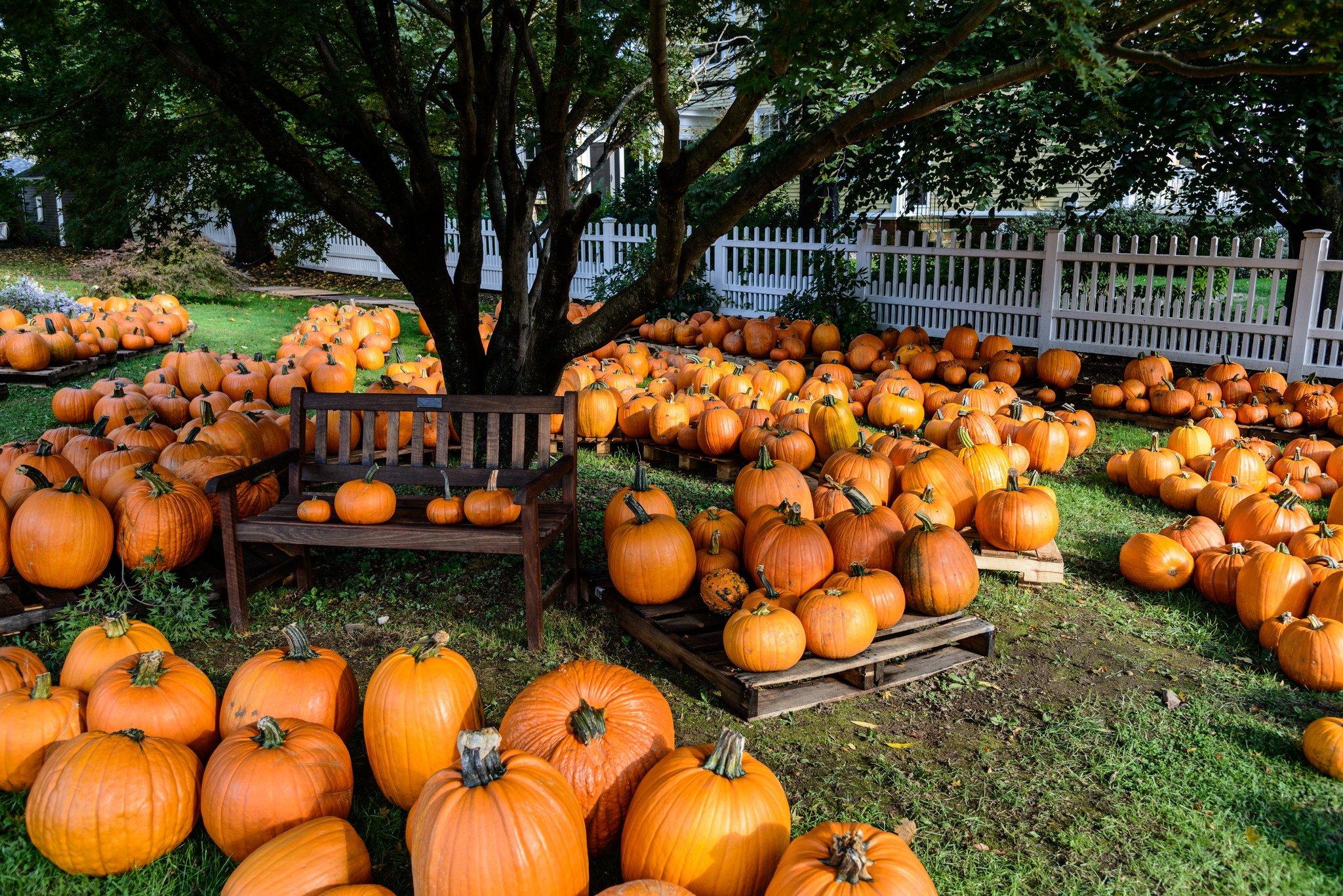 67 676199 pumpkin patch halloween autumn wallpaper fall pumpkins desktop