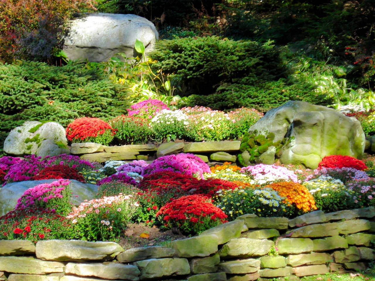 Mums In A Garden 1280x960 Download Hd Wallpaper Wallpapertip