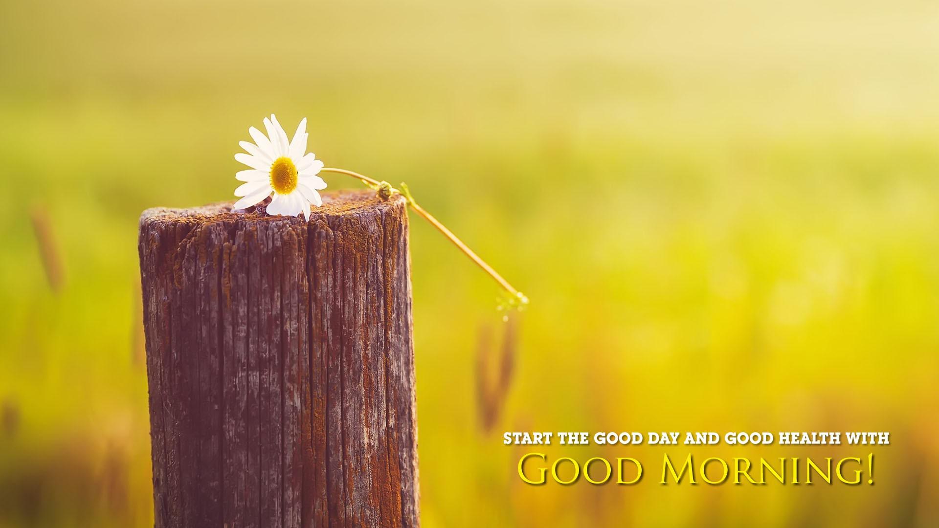Good Morning Flower Thought Wallpapers New Hd Wallpapers Good Morning Best Wishes 1920x1080 Download Hd Wallpaper Wallpapertip