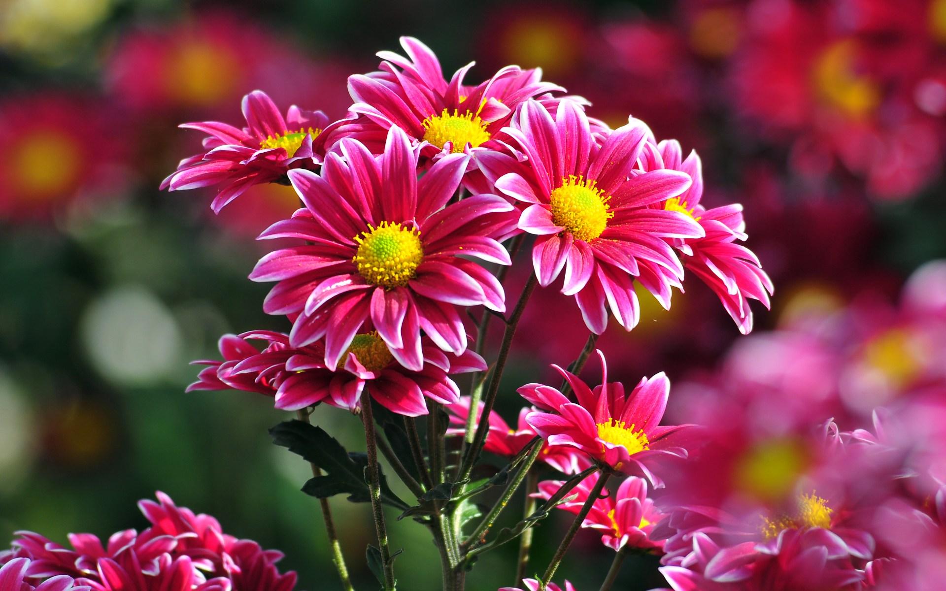 Best Flower Images Hd 1920x1200 Download Hd Wallpaper Wallpapertip